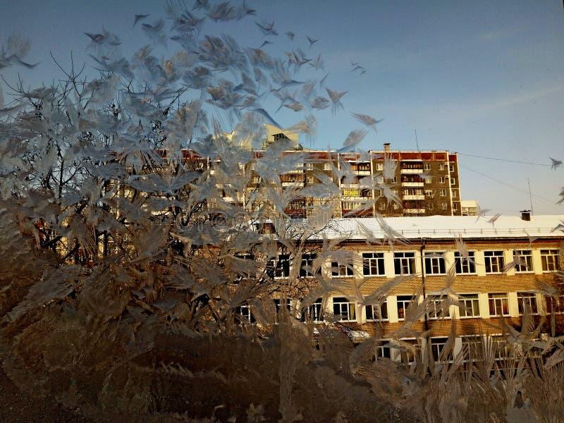 霜的样式在房子的玻璃窗的 免版税图库摄影