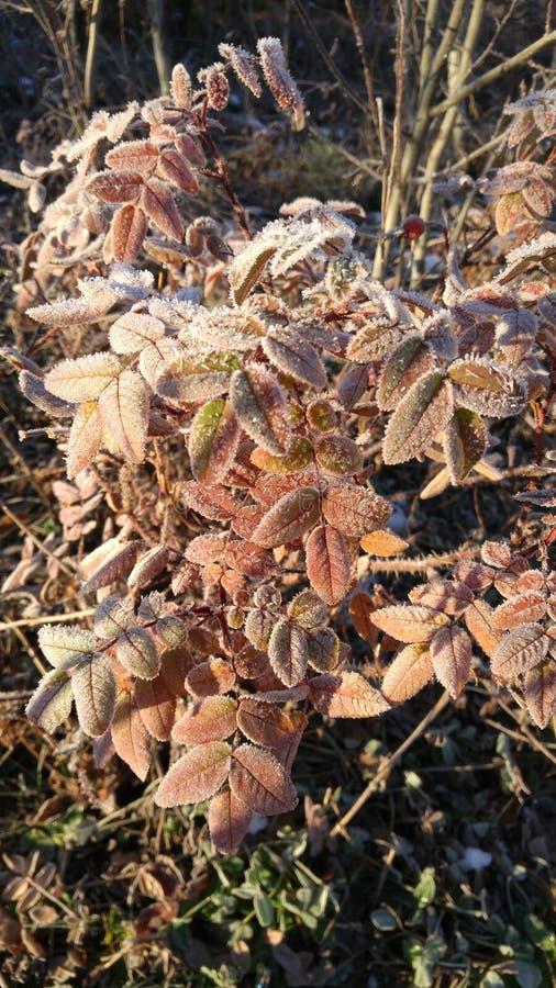 结霜的秋天 库存照片