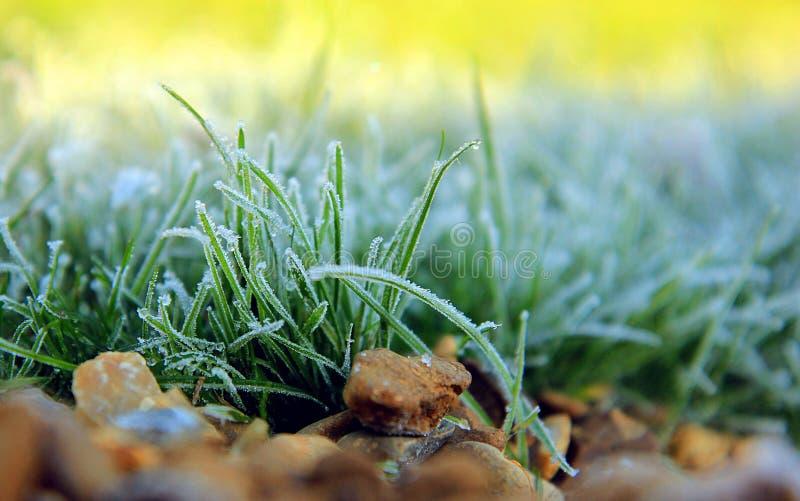 结霜的草在庭院里 库存照片