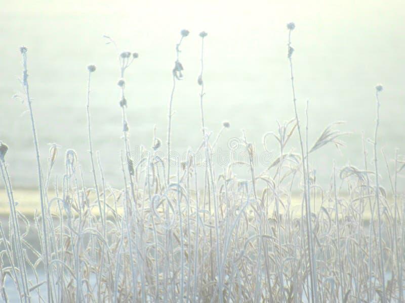 结霜的阳光 库存图片