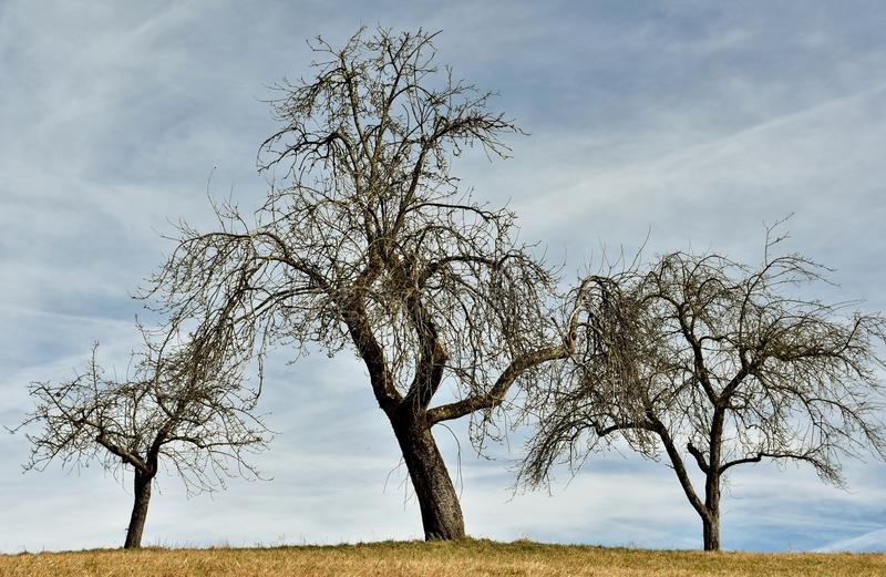 露出三个结构树 库存图片