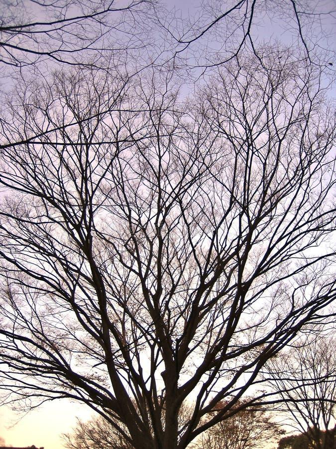 露出分支的结构树 图库摄影