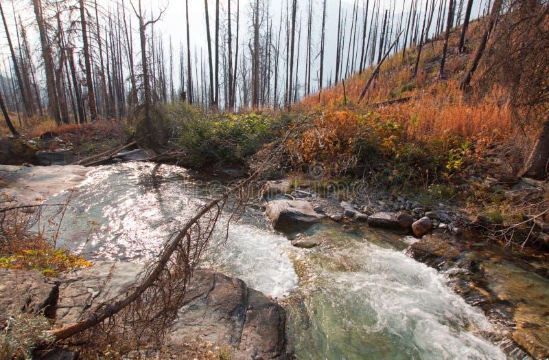 露出小河在冰川国家公园在蒙大拿美国 免版税库存照片