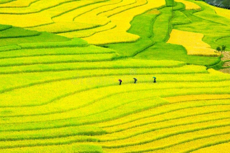 露台的米调遣-三名妇女在Mu Cang柴, Yen Bai,越南参观他们的米领域 免版税库存照片