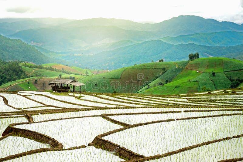 露台的米领域在泰国 免版税库存图片