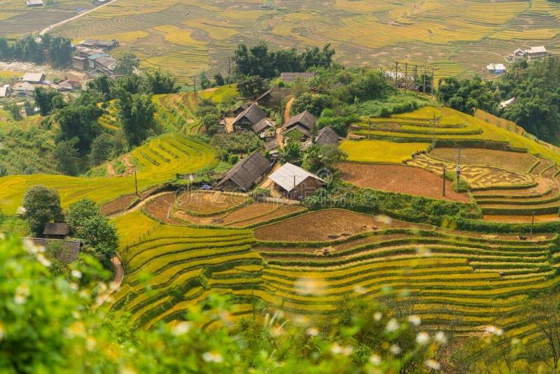 露台的米领域在Sapa,越南 库存照片