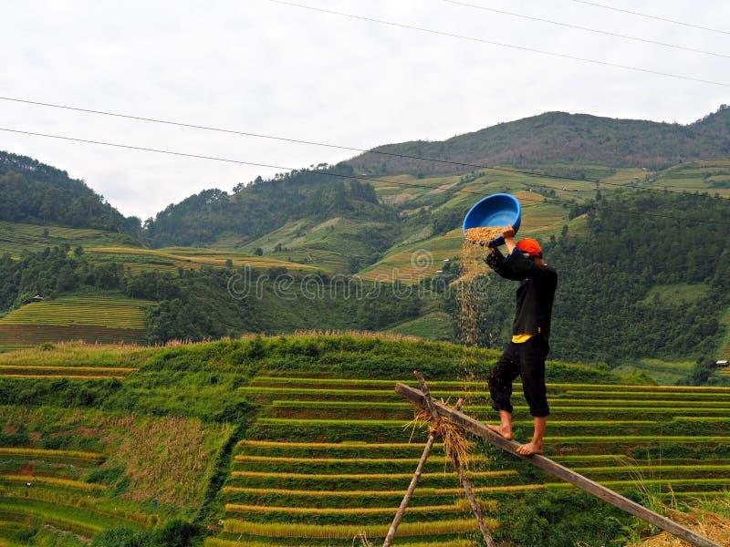 露台的米领域, Mu Cang柴越南 免版税库存图片