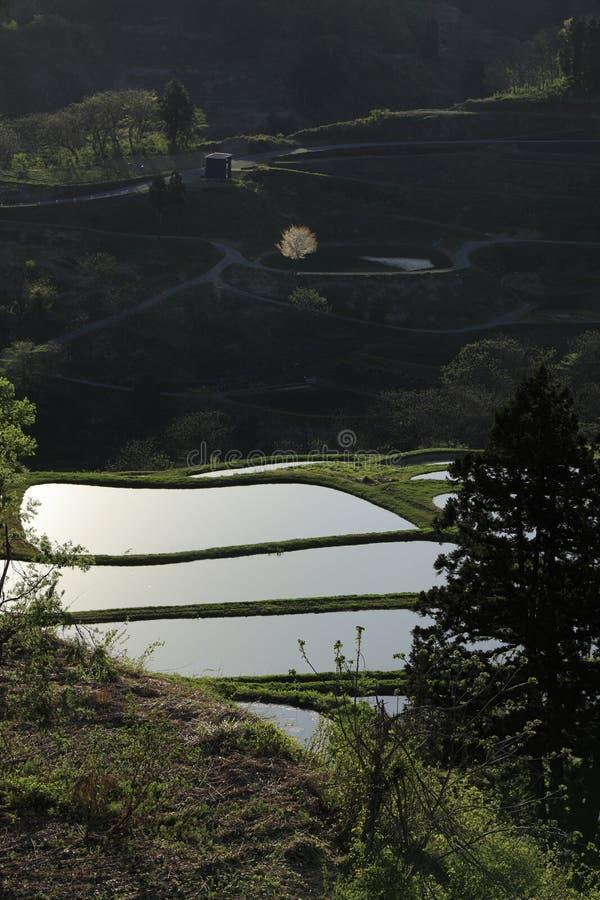 露台的米领域 图库摄影