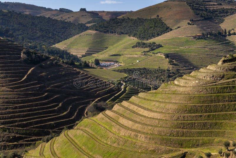 露台的葡萄园的风景看法杜罗河谷的在Pinhao附近村庄  图库摄影