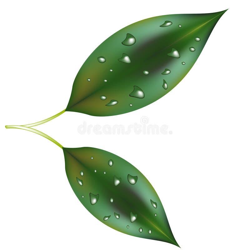 露水叶子 向量例证