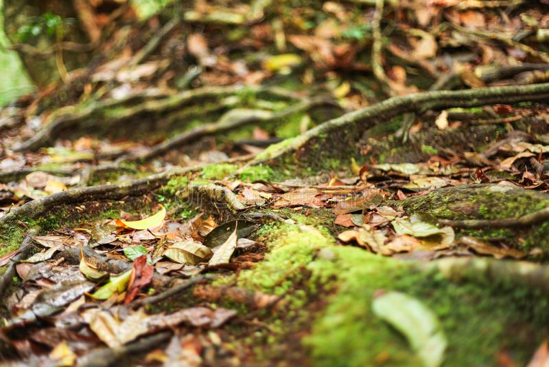 露水和更多叶子在ther地板上 免版税库存照片