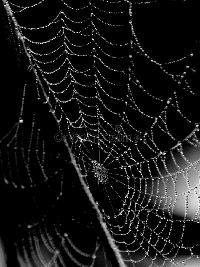 露水被透湿的蜘蛛网 免版税库存图片