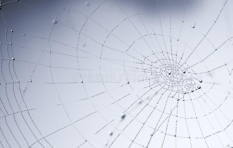 露滴发光的球状蜘蛛网 图库摄影