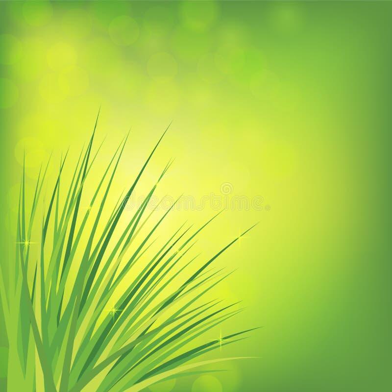 露滴在绿草发光在阳光下 背景蓝色云彩调遣草绿色本质天空空白小束 库存例证