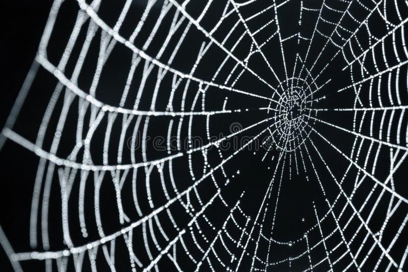 露滴蜘蛛网 库存照片