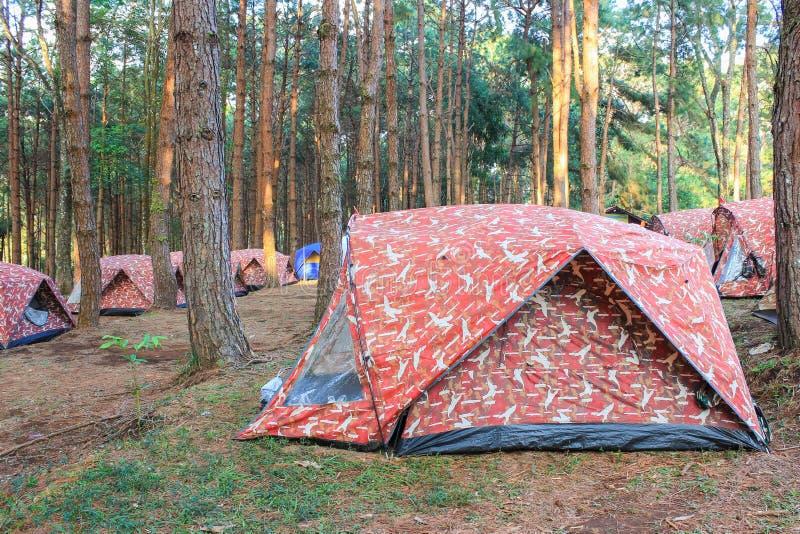 露营地在杉木森林里 免版税库存图片