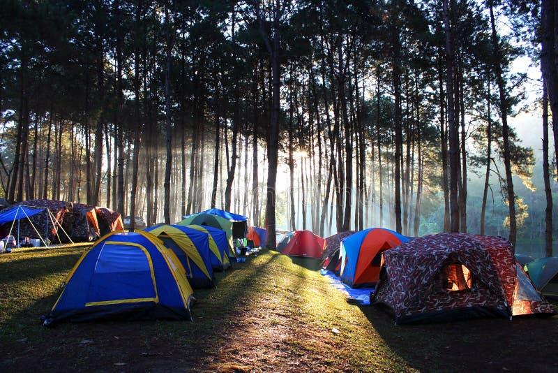 露营地在杉木森林里 免版税库存照片