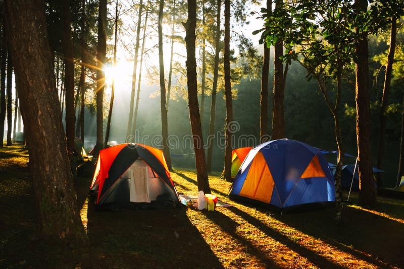 露营地在杉木森林里 图库摄影