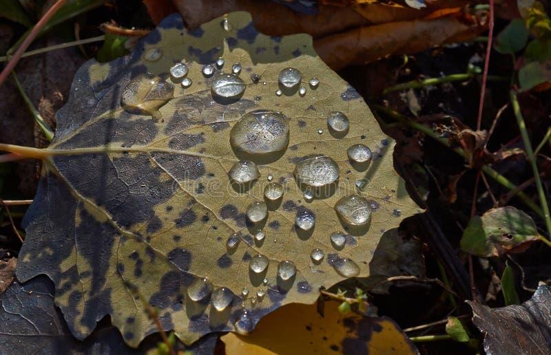露滴在秋天公园 库存图片