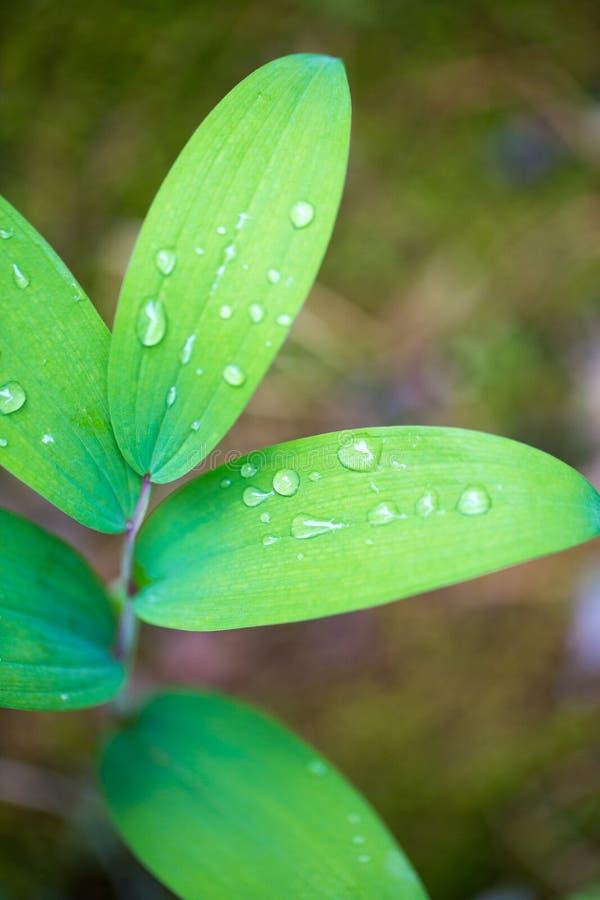 露滴绿色叶子 库存照片