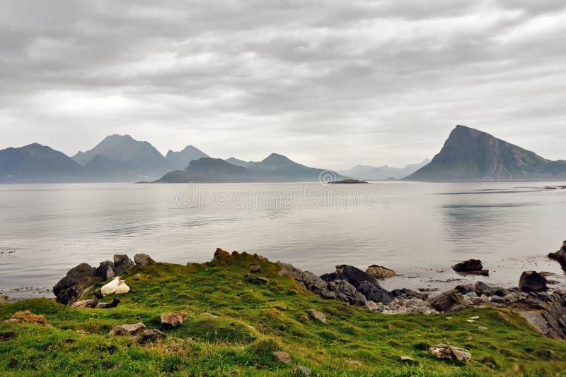 阴霾的挪威海岛 多云北欧天 库存图片