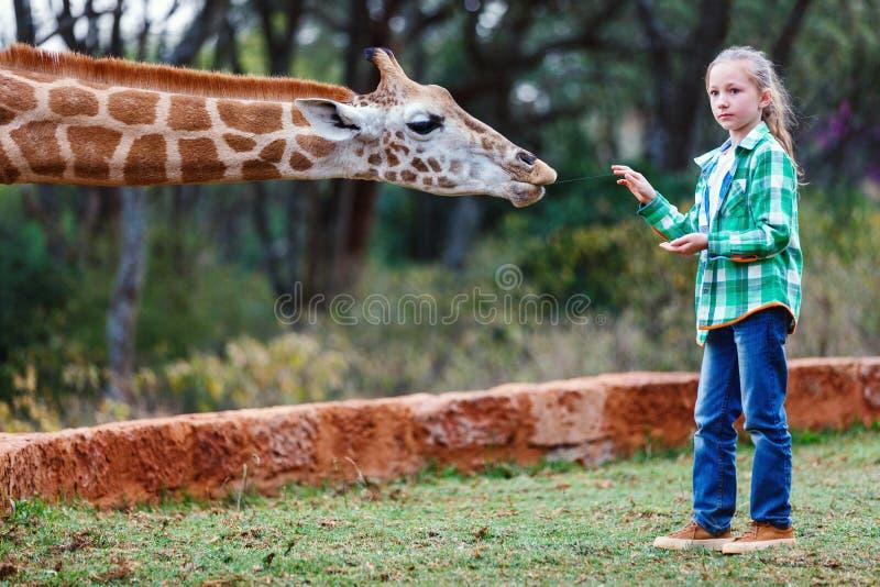 青少年的哺养的长颈鹿在非洲 免版税库存图片