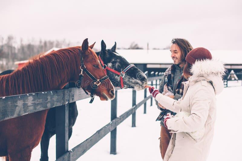 青少年的女孩和她的父亲哺养的马在大农场 库存图片