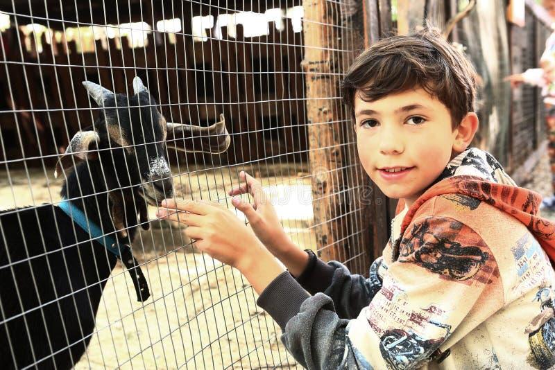 青春期前的男孩在山羊笼子旁边的动物园里 库存图片