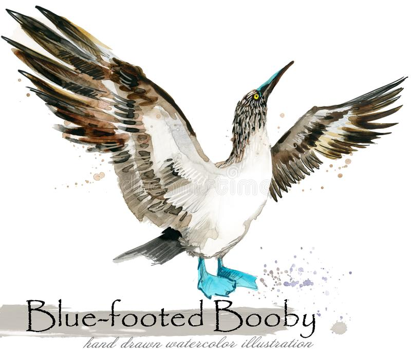 青有脚的笨蛋手拉的水彩例证 库存例证
