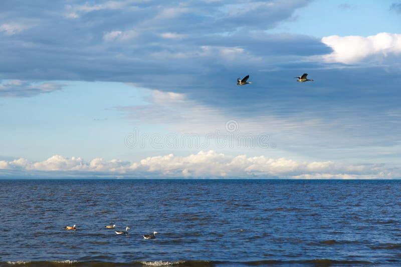 青海湖 库存照片