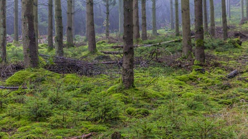 青苔和分支的图象在地面上在森林里 库存图片