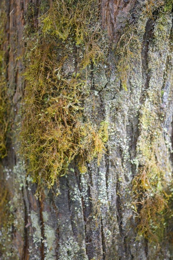 青苔和地衣在森林关闭青苔和地衣 免版税库存图片