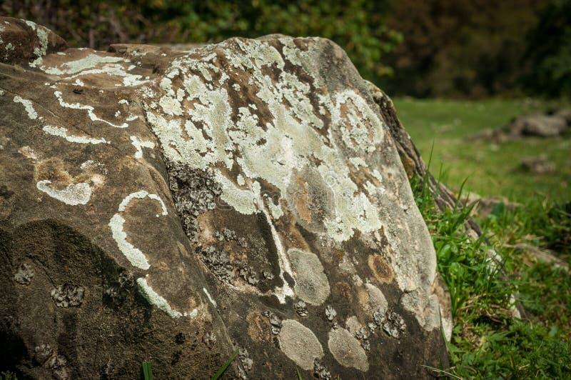青苔和地衣在石头增长 宏指令 地衣青苔石头背景  阿塞拜疆秋天自然 免版税库存图片