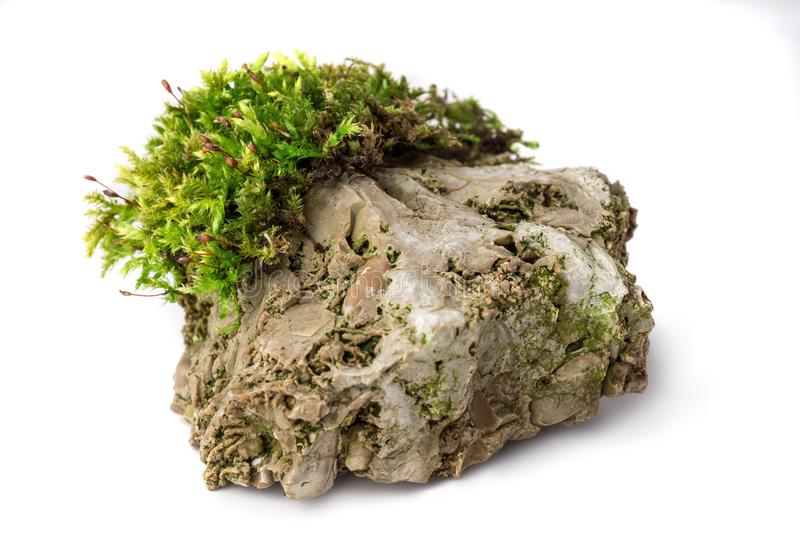 青苔和岩石在被隔绝的白色背景 图库摄影