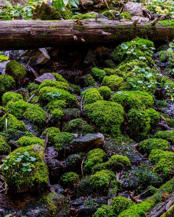 青苔和注册科罗拉多森林 库存照片