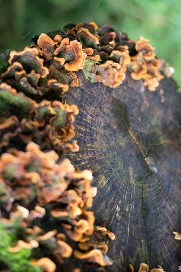 青苔和真菌在日志 库存图片