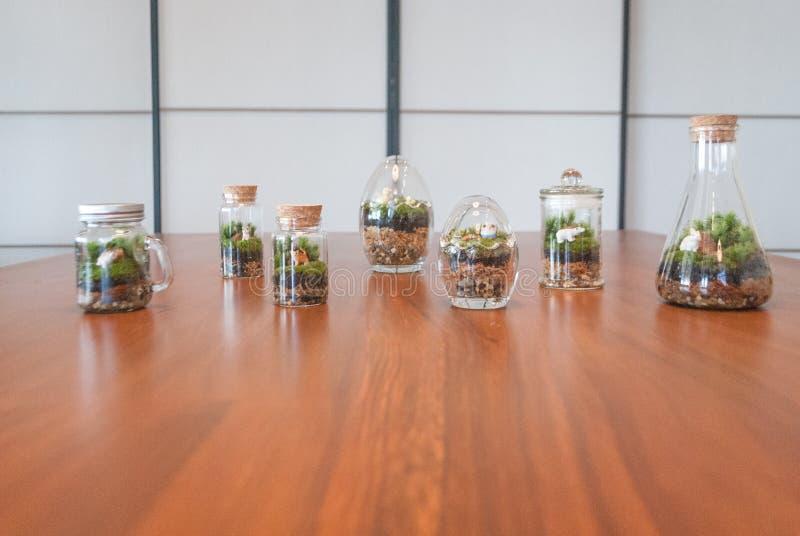 青苔和蕨在瓶 库存照片