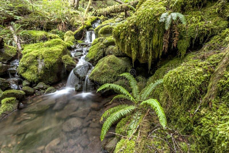 青苔在雨林里盖了岩石 图库摄影