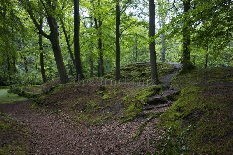 青苔小山在Backershagen庄园的公园 免版税库存照片