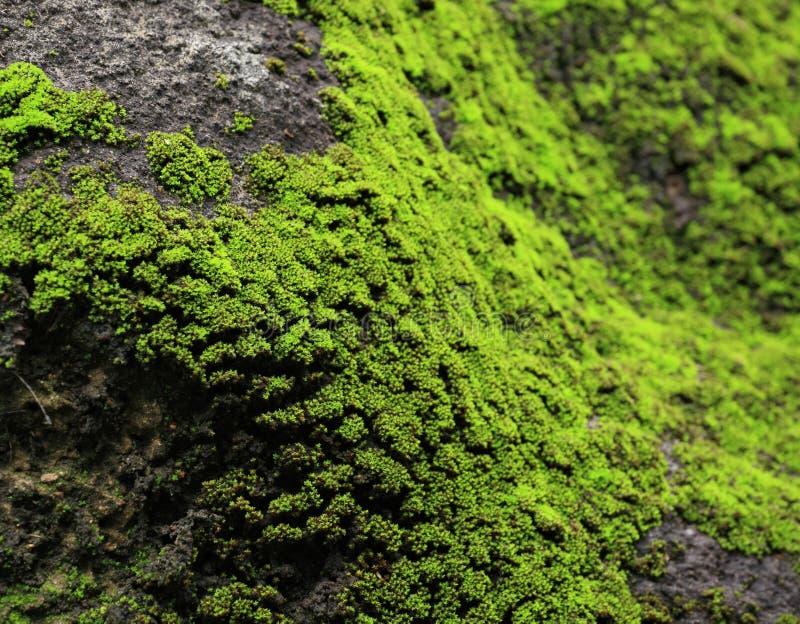 青苔岩石 库存照片