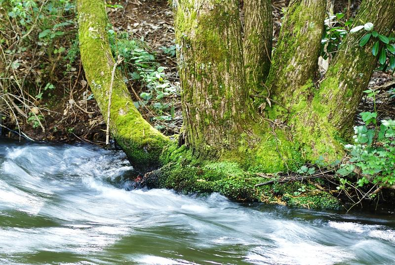 青苔树和河 库存图片