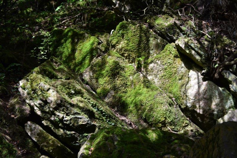 青苔盖了岩石, Mendip小山 免版税库存图片