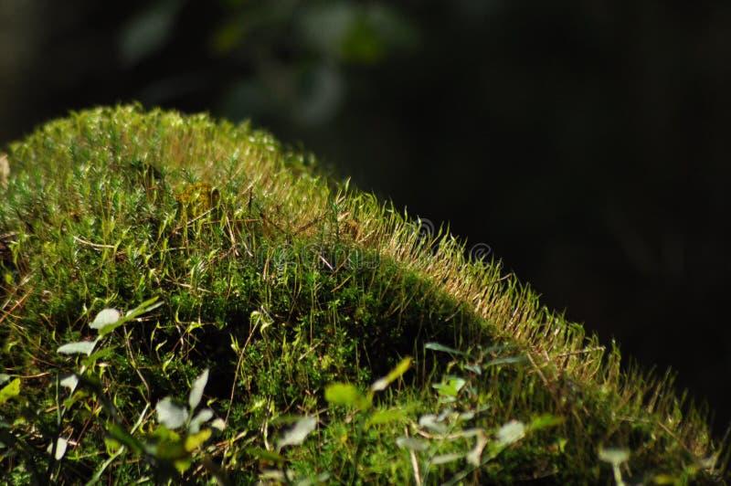 青苔盖了树枝幼木和年幼植物 光到达 免版税库存照片