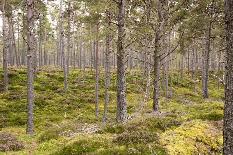 青苔盖了森林地板 图库摄影