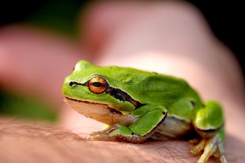 青蛙一点 免版税库存照片