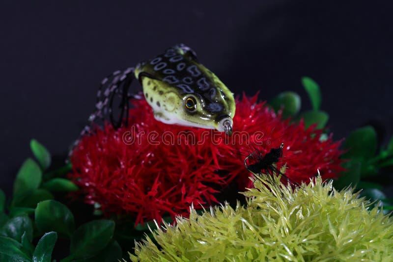 青蛙做了与锋利的勾子的塑料是非常合适的 库存照片