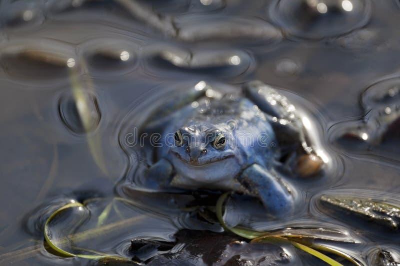 青蛙停泊 免版税库存图片