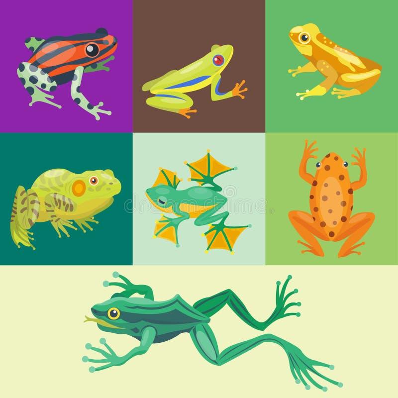 青蛙动画片热带动物动画片自然象滑稽和被隔绝的吉祥人字符野生滑稽的森林蟾蜍两栖动物 向量例证