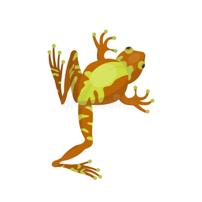 青蛙动画片热带棕色动物动画片自然象滑稽和被隔绝的吉祥人字符野生滑稽的森林蟾蜍 皇族释放例证