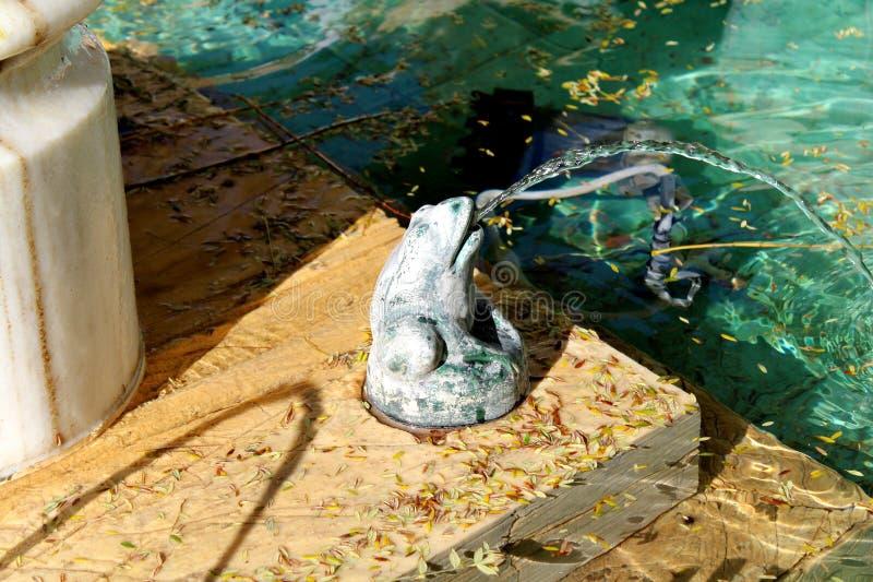 青蛙喷泉  库存图片